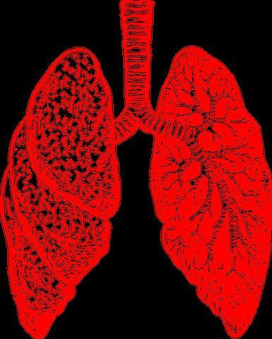 أسباب سرطان الرئة ألياف الاسبستوس Asbestos fibers