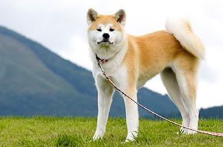 اغلى عشر كلاب فى العالم