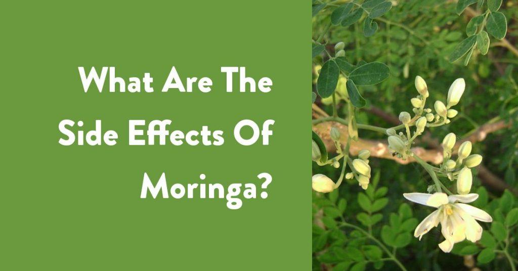 فوائد المورينجا و الآثار الجانبية له