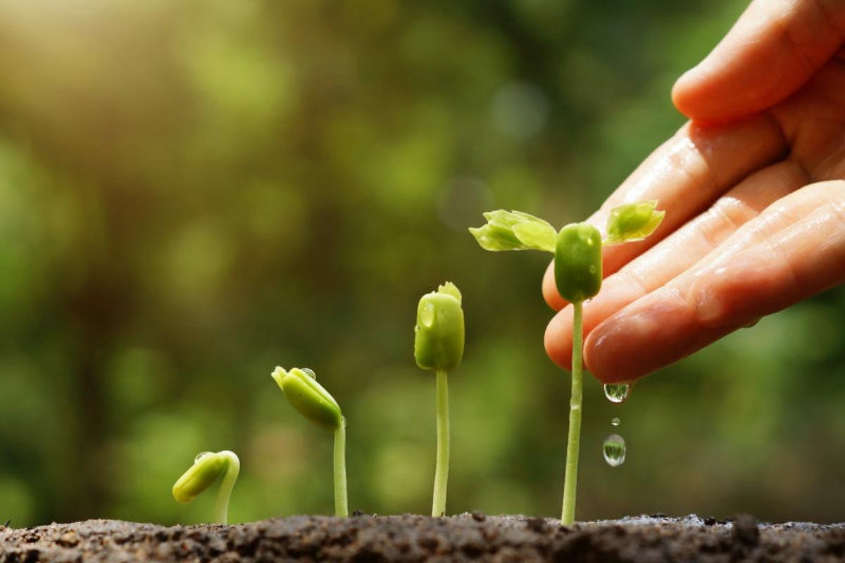 طرق استخدام الأمونيا : غذاء للنباتات في منزلك