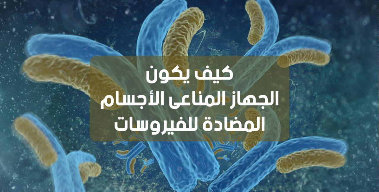كيف يكون الجهاز المناعي الأجسام المضادة للفيروسات
