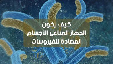 Photo of كيف يكون الجهاز المناعي الأجسام المضادة للفيروسات ؟