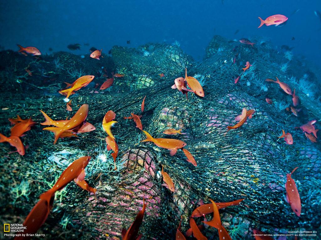 الأسماك التي تعيش في الجبال البحرية