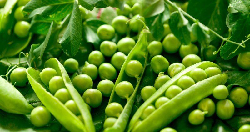 أسهل البذور التى يمكنك زراعتها