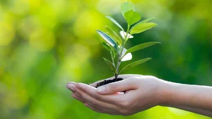 التربية البيئية