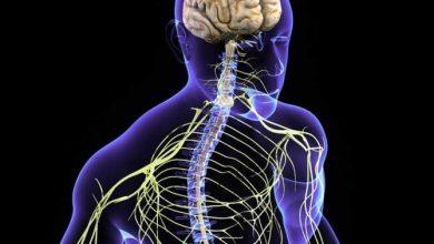 Photo of تقوية الجهاز العصبي و طرق تنشيط الجهاز العصبي المركزي طبيعيا