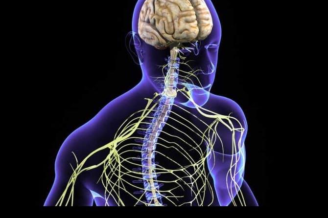 تقوية الجهاز العصبي