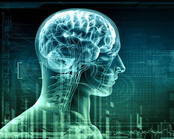 فوائد اكل لحم الارنب علي الجهاز العصبي