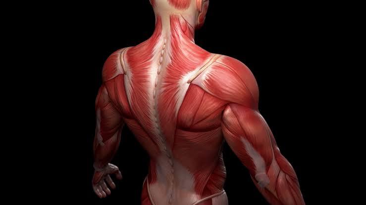 الجوز البرازيلي يعزز صحة العضلات