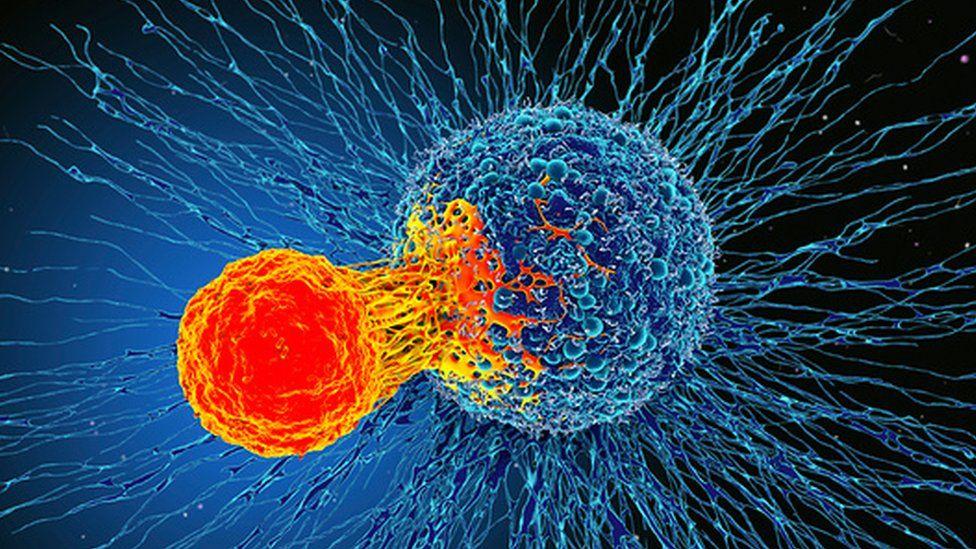 فوائد الحمص في الوقاية من السرطان