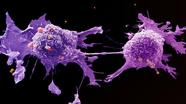 الخردل يكافح السرطان