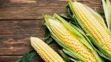Photo of تعرف علي حساسية الذرة و ما هي فوائد زيت الذرة نشا الذرة ؟