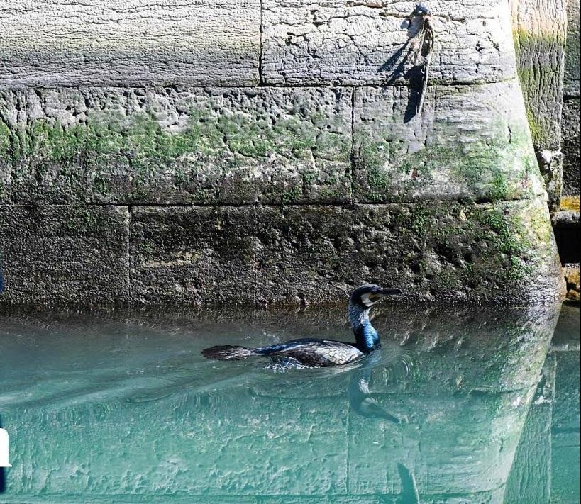 الطيور البحرية في فينيسيا