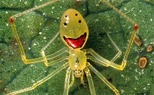 أغرب أنواع العناكب