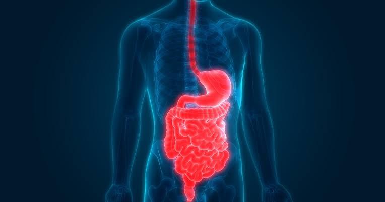 فوائد الفسفور الصحية : يعزز عملية الهضم