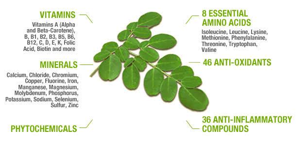 القيمة الغذائية لنبات المورينجا