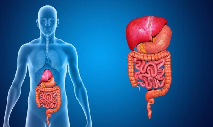 فوائد الكراث علي الجهاز الهضمي