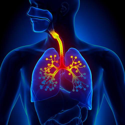 فوائد الكرفس علي الجهاز التنفسي