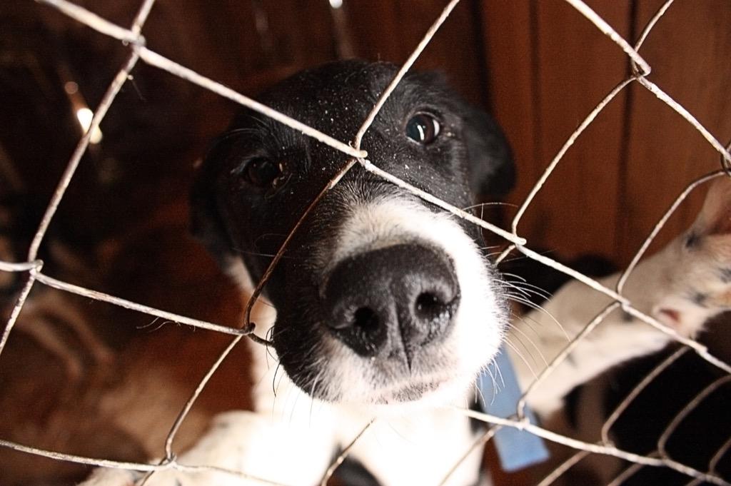 حقائق مذهلة : الكلاب قادرة علي ان تشم رائحة السرطان