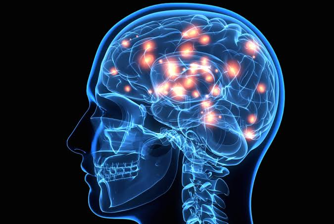 الفوائد الصحية للمشروم : المشروم يعزز صحة الدماغ