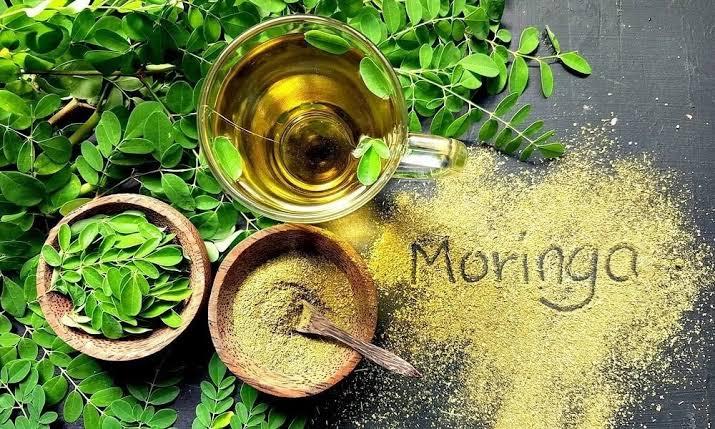 فوائد المورينجا و فوائد شاي المورينجا و الاثار الجانبية للمورينجا مقالات منصة القارئ العربى