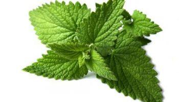 خضروات و فواكه مفيدة للصحة النعناع