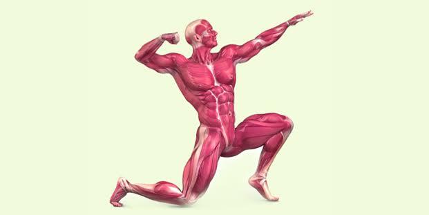 بذور القنب مفيدة لصحة العضلات