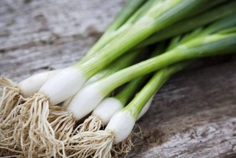 البصل الأخضر
