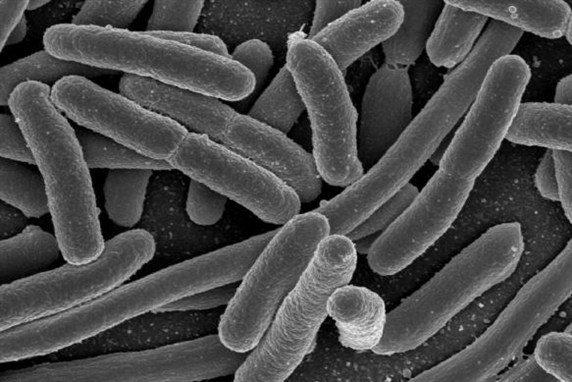 البكتيريا و الفيروسات
