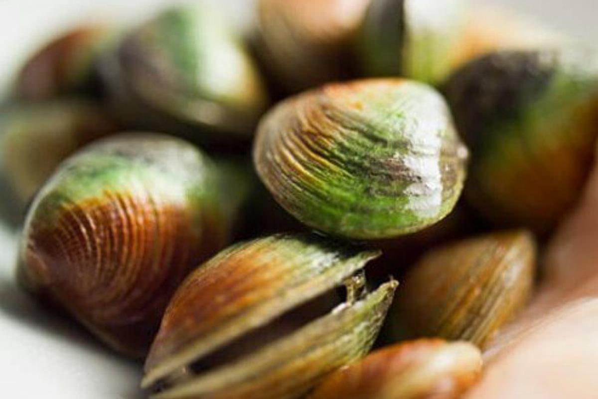 أسباب التسمم الغذائي : سموم المحار الشللي