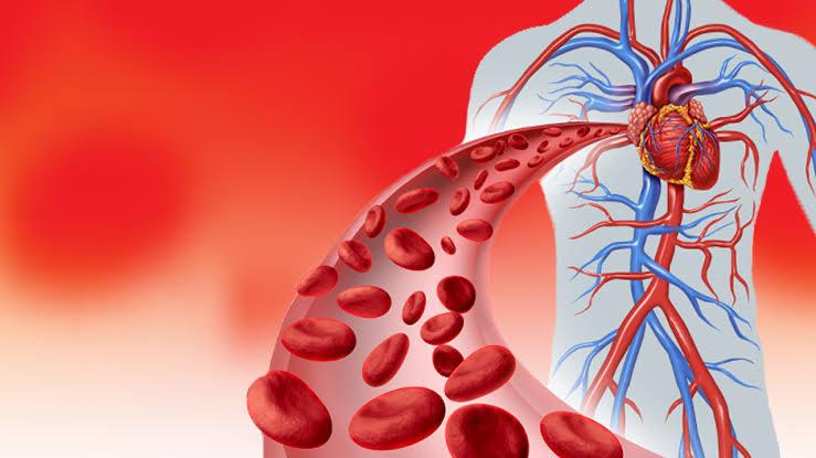 جذور اللوتس تحسن الدورة الدموية