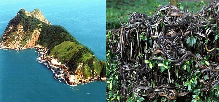 جزيرة الأفاعى - البرازيل