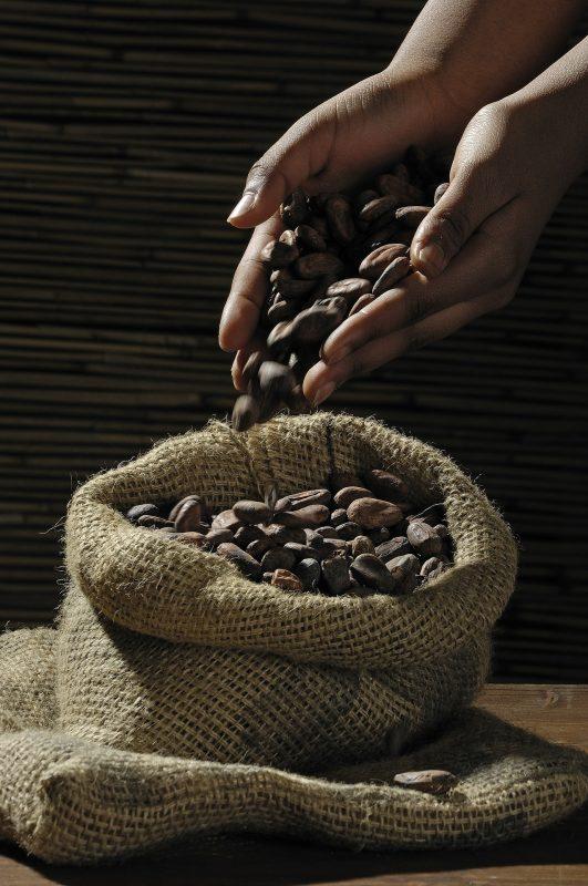حبوب الكاكاو و فوائد الشيكولاتة