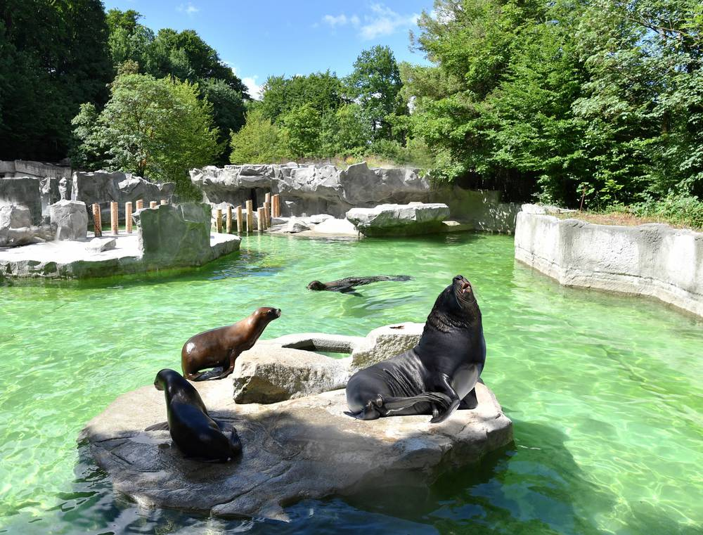 أفضل الأماكن السياحية في ميونخ : حديقة حيوان Hellabrunn