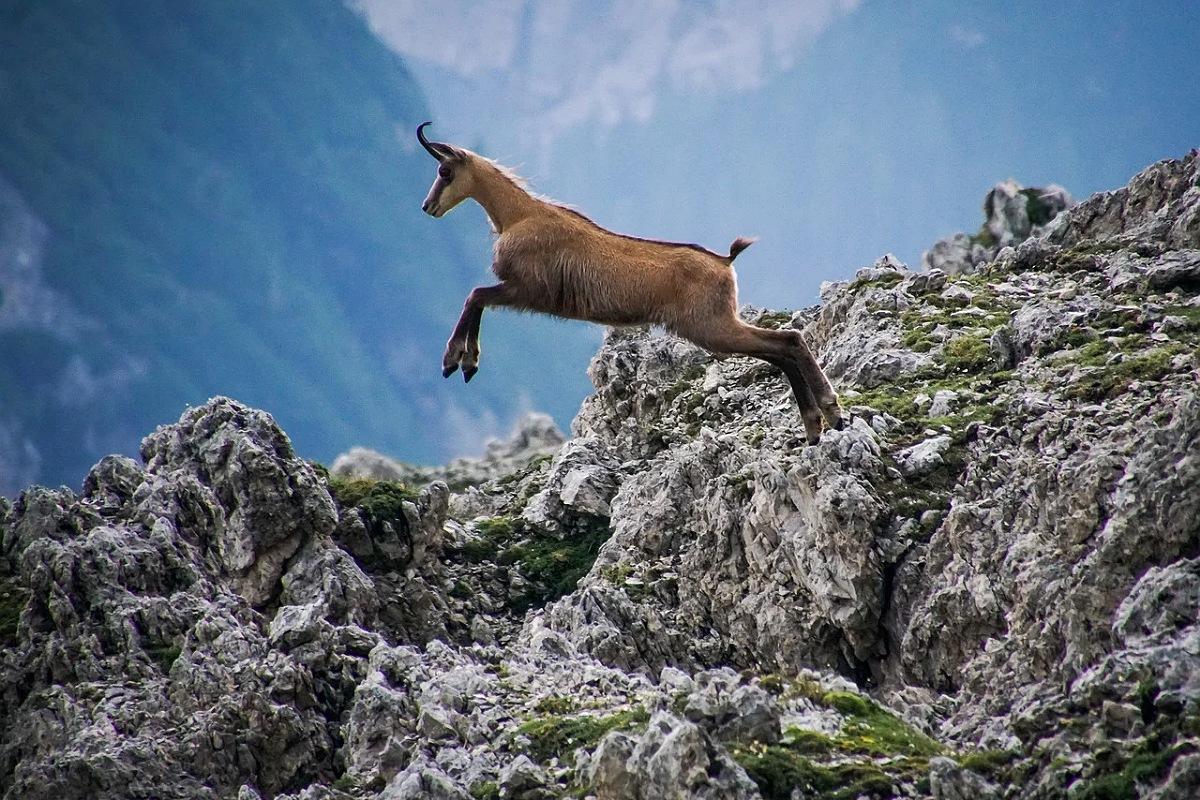 حيوانات جبال الألب