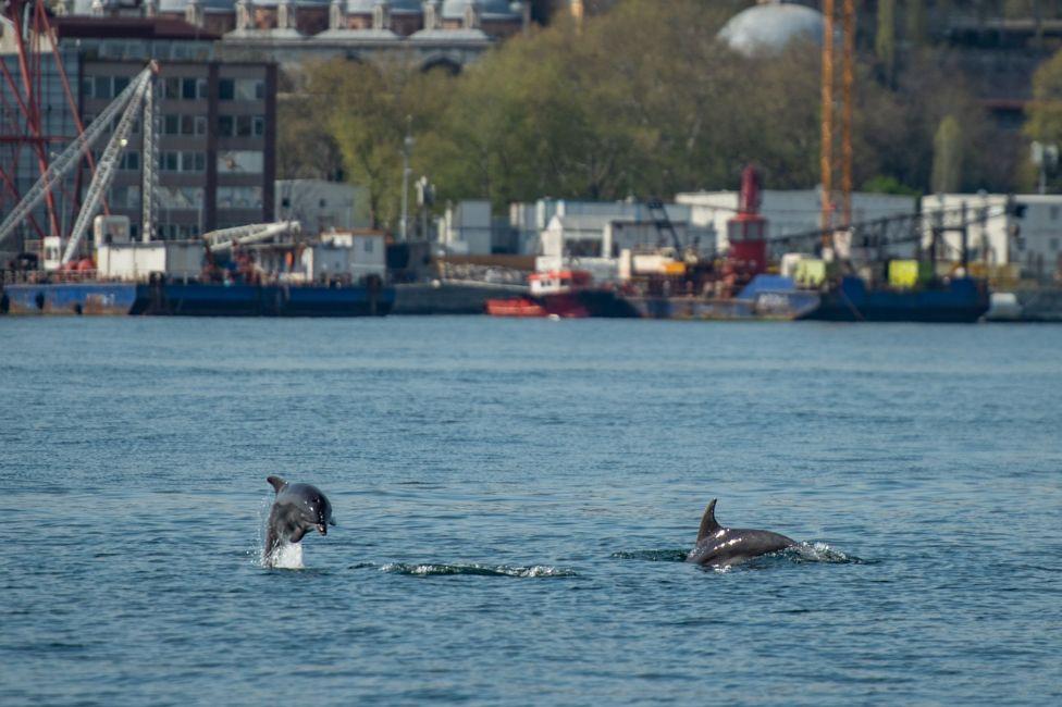 عجائب و غرائب الحيوانات : دلافين في اسطنبول