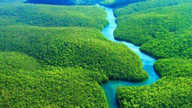 Photo of غابات الأمازون Amazon rainforest