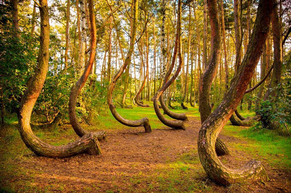 غابة كروكد - بولندا