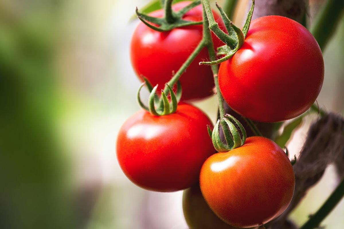 تناولي الطماطم للحصول على بشرة صحية