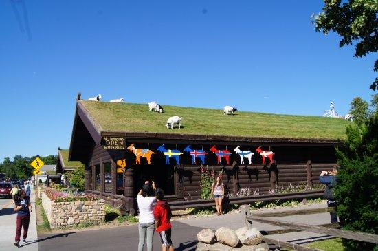 غرب تصرفات الحيوانات : مطعم الجونسون السويدي - أمريكا