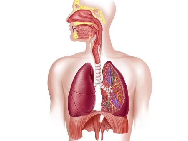 فوائد فاكهة الباشن فروت تعزز صحة الجهاز التنفسي