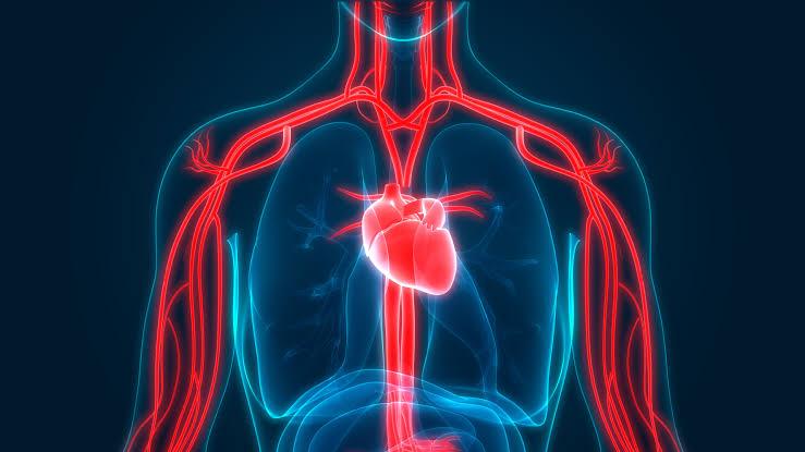 فوائد فاكهة اللونجان  : تنشط الدورة الدموية