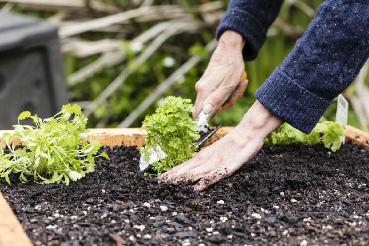 عادات تطيل عمرك : ازرع حديقة