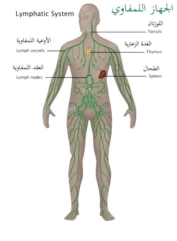 أعضاء وأجهزة الجسم