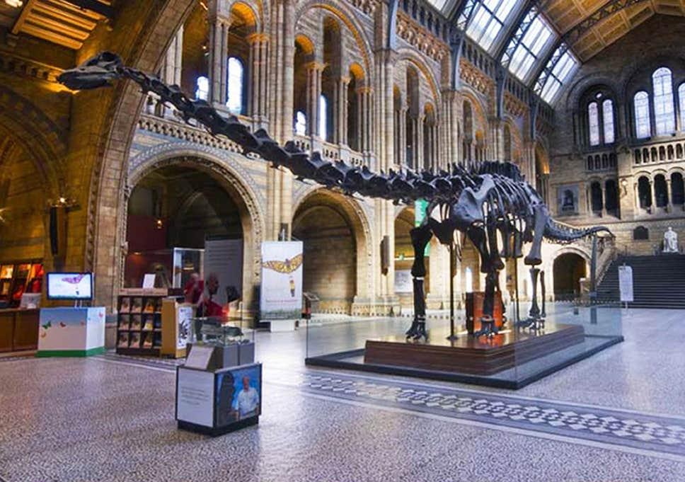 متحف التاريخ الطبيعي من أشهر الأماكن السياحية في لندن إنجلترا