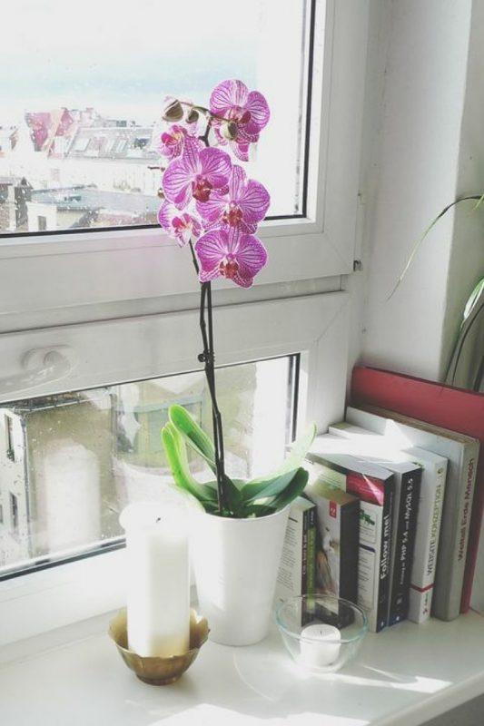 نباتات تناسب غرفة الحمام : نبات زهرة الأوركيد