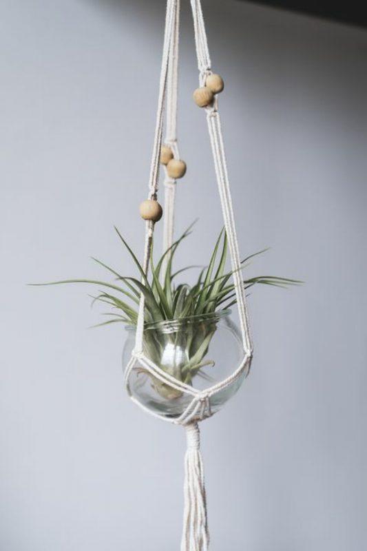 نباتات الهواء Air Plant
