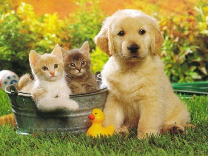 نصائح لسلامة حيواناتك الأليفة