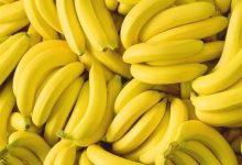 Photo of فوائد الموز الصحية : إليك 6 فوائد صحية مدهشة من الموز