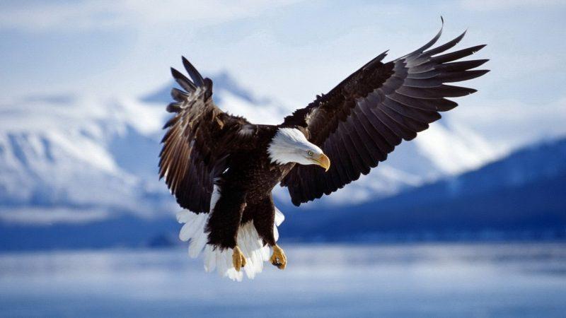 55 لقب من الألقاب العربية للكائنات الحية
